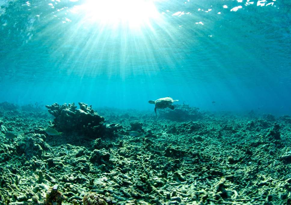 coral-bleaching-turtle