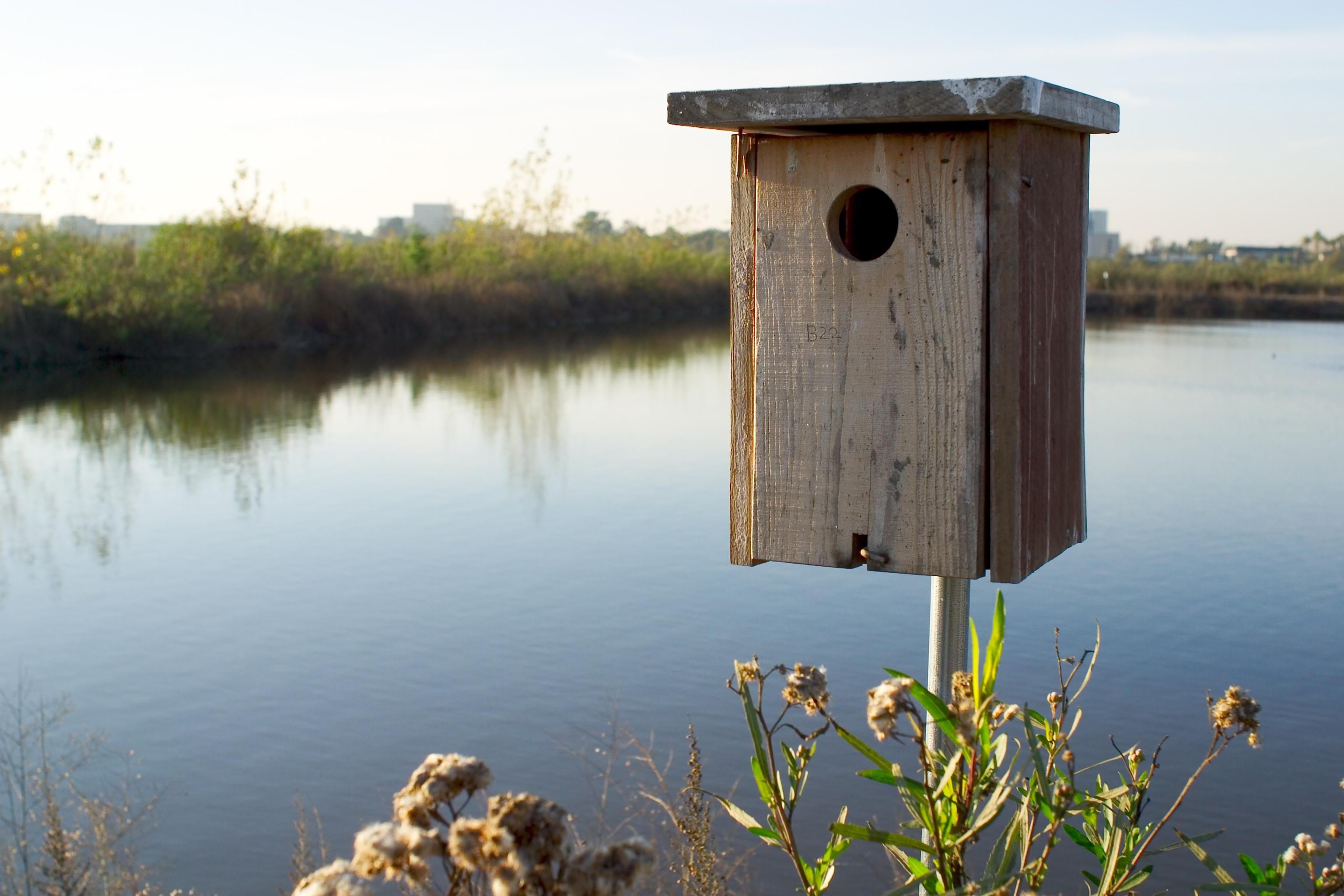 sjws-birdwatching